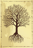 Hand drawing  tree with roots Stock Images