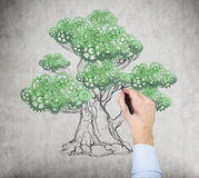 A hand is drawing a tree on the wall. A concept of the process of a growing business Stock Photography