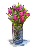 Hand drawing tulips in a glass vase. Hand drawing bouquet from sketchbook Stock Photos