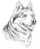 Hand drawing vector portrait of siberian husky. Vector Portrait of siberian husky in black color hand drawing Illustration on white background Royalty Free Stock Photos