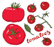 Hand drawing vector red tomato Stock Photo