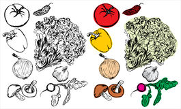 Hand drawing vegetables collection Royalty Free Stock Images