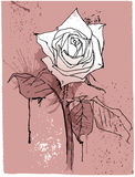 Hand drawing vintage rose. Royalty Free Stock Images