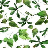 Ivy leaves ornament. Hand drawing watercolor green Ivy leaves ornament Royalty Free Stock Photos