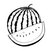 Hand drawing Watermelon -Vector Drawn Illustration. Hand drawing of Watermelon on white background. Black and White simple line Vector Illustration for Coloring royalty free illustration