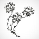 Hand-drawn ανθοδέσμη τριών λουλουδιών της εκλεκτής ποιότητας απεικόνισης υποβάθρου κρίνων Στοκ Φωτογραφίες
