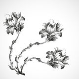 Hand-drawn ανθοδέσμη τριών λουλουδιών του κρίνου, εκλεκτής ποιότητας απεικόνιση υποβάθρου Στοκ εικόνα με δικαίωμα ελεύθερης χρήσης