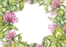 Hand-drawn απεικόνιση λουλουδιών κόκκινου τριφυλλιού watercolor Χρωματισμένη βοτανική three-leaved χλόη λιβαδιών, που απομονώνετα Στοκ εικόνα με δικαίωμα ελεύθερης χρήσης