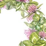 Hand-drawn απεικόνιση λουλουδιών κόκκινου τριφυλλιού watercolor Χρωματισμένη βοτανική three-leaved χλόη λιβαδιών, που απομονώνετα Στοκ Φωτογραφία