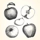 Hand-drawn απεικόνιση της Apple Στοκ Φωτογραφίες