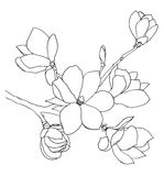 Hand-drawn απεικόνιση των λουλουδιών magnolia Στοκ εικόνα με δικαίωμα ελεύθερης χρήσης
