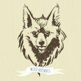 Hand-drawn δασικά ζώα δεικτών: αλεπού Στοκ Εικόνα