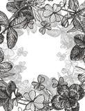 Hand-drawn γραφική απεικόνιση λουλουδιών τριφυλλιού Χρωματισμένη βοτανική three-leaved χλόη λιβαδιών, που απομονώνεται στο άσπρο  Στοκ εικόνες με δικαίωμα ελεύθερης χρήσης