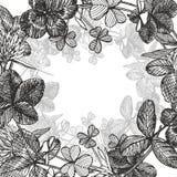 Hand-drawn γραφική απεικόνιση λουλουδιών τριφυλλιού Χρωματισμένη βοτανική three-leaved χλόη λιβαδιών, που απομονώνεται στο άσπρο  Στοκ φωτογραφία με δικαίωμα ελεύθερης χρήσης