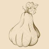 Hand-Drawn εκλεκτής ποιότητας Pear-Shaped κολοκύθα ύφους Στοκ Εικόνες