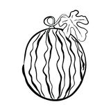 Hand-drawn διανυσματική απεικόνιση ενός καρπουζιού με έναν κλαδίσκο και ένα λ Στοκ Φωτογραφίες