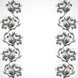 Hand-drawn κάθετα λουλούδια συνόρων του εκλεκτής ποιότητας υποβάθρου κρίνων Στοκ Φωτογραφίες