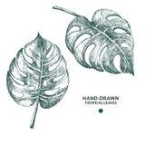 Hand-drawn φύλλα monstera Στοκ Εικόνες