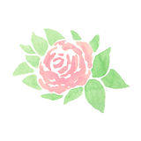 Hand drawn abstract watercolor pink rose with leaves. On the white background Royalty Free Illustration