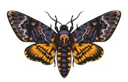 Hand Drawn Acherontia Styx Butterfly Color. Hand drawn Acherontia Styx butterfly isolated on white background. Death`s-Head Hawkmoth top view. Illustrations in stock illustration