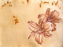 Hand-drawn achtergrond Royalty-vrije Stock Afbeeldingen