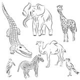 Hand Drawn African Animals and Birds. Doodle Drawings of Elephant, Zebra, Giraffe, Camel, Marabou and Secretary-bird. Sketch Style. Vector Illustration Royalty Free Stock Images