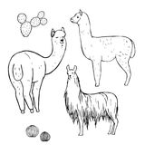 Hand drawn alpacas. Vector sketch illustration. Hand drawn alpacas. Line black drawing on a white background. Vector sketch illustration Royalty Free Illustration