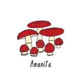 Hand drawn amanita mushrooms. Vector illustration of hand drawn poisonous fungus Amanita. Ink drawing, graphic style. Beautiful design elements Royalty Free Stock Photos