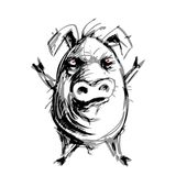 Hand drawn angry pig. Eps8. RGB Global colors Royalty Free Stock Images