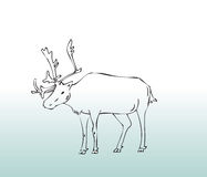 Hand drawn animal deer Royalty Free Stock Image