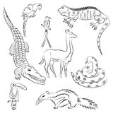 Hand Drawn Animals of South America. Doodle Drawings of Iguana, Crocodile, Parrot Ara, Toucan, Hummingbird,Anaconda, Anteater and Stock Images