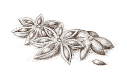 Hand drawn anise. Stock Image