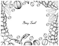 Hand Drawn of Antidesma Thwaitesianum and Blushwood Berries. Berry Fruit, Illustration Frame of Hand Drawn Sketch of Antidesma Thwaitesianum and Blushwood Stock Photo