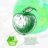 Hand drawn apple. Sketch style organic fruit illustration Stock Image