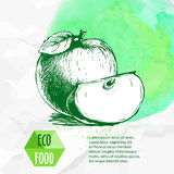 Hand drawn apples. Sketch style organic fruit illustration Royalty Free Stock Photography