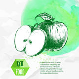 Hand drawn apples. Sketch style organic fruit illustration. On watercolor green background. Eco food vector vector illustration