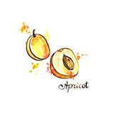 Hand drawn apricot Royalty Free Stock Photography