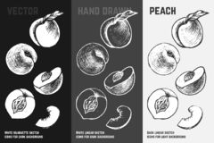 Hand drawn apricots and peaches. Vector sketch set vector illustration