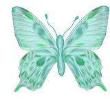Hand drawn aquamarine butterfly. Pattern Royalty Free Stock Photography