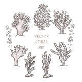 Hand drawn aquatic coral doodle vector illustration. Sketch royalty free illustration