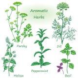 Hand drawn aromatic herbs set. Stock Image