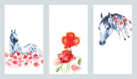 Set of watercolor hand painting cards with hand dapple grey horse and red poppies flowers on white. royalty free illustration