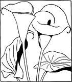 Hand Drawn Arum Lily /Eps Royalty Free Stock Image