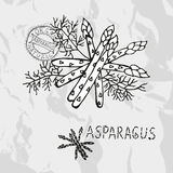 Hand drawn asparagus Royalty Free Stock Image
