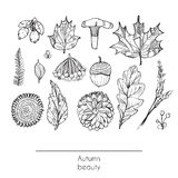 Hand drawn autumn beautiful set of leaves, flowers, branches, mushroom and berries, isolated on white background. Black and white Royalty Free Stock Photos