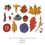 Hand drawn autumn beautiful set of leaves, flowers, branches, mushroom and berries, isolated on white background. Colorful illustr Royalty Free Stock Photography