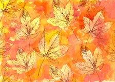 Hand drawn autumn leaves Stock Photo