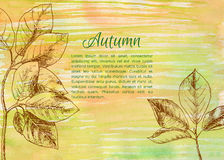Hand drawn autumn leaves Royalty Free Stock Image