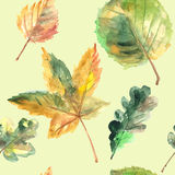Hand drawn autumn leaves Stock Photos