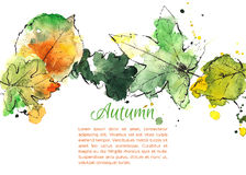 Hand drawn autumn leaves. Colorful hand drawn autumn leaves. Vector illustration Royalty Free Stock Images